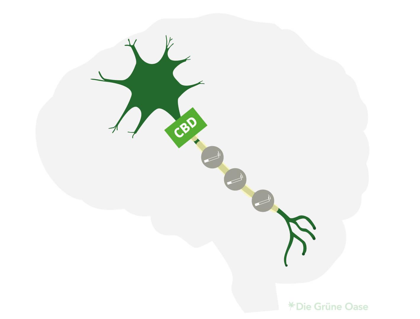 Le CBD bloque des substances envoyées dans la cellule nerveuse
